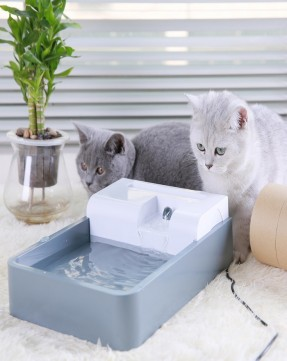 Pioneer Pet Water Fountain For Cats & Small Dog